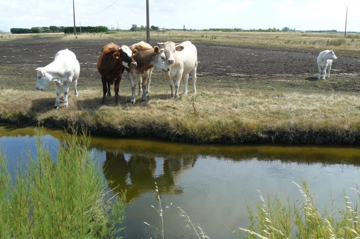 veel paarden in Frankrijk