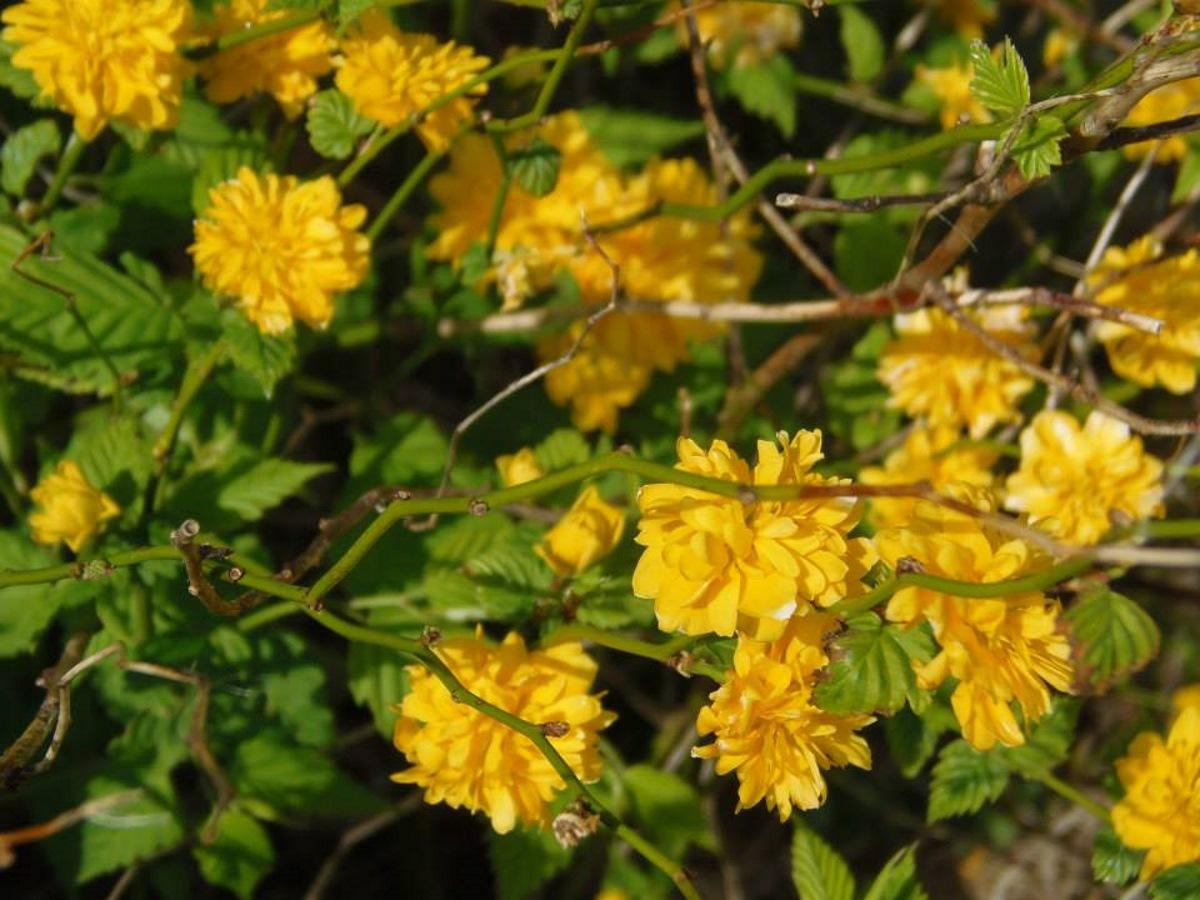 mooie-gele-bloemen-in-onze-tuin-in-frankrijk
