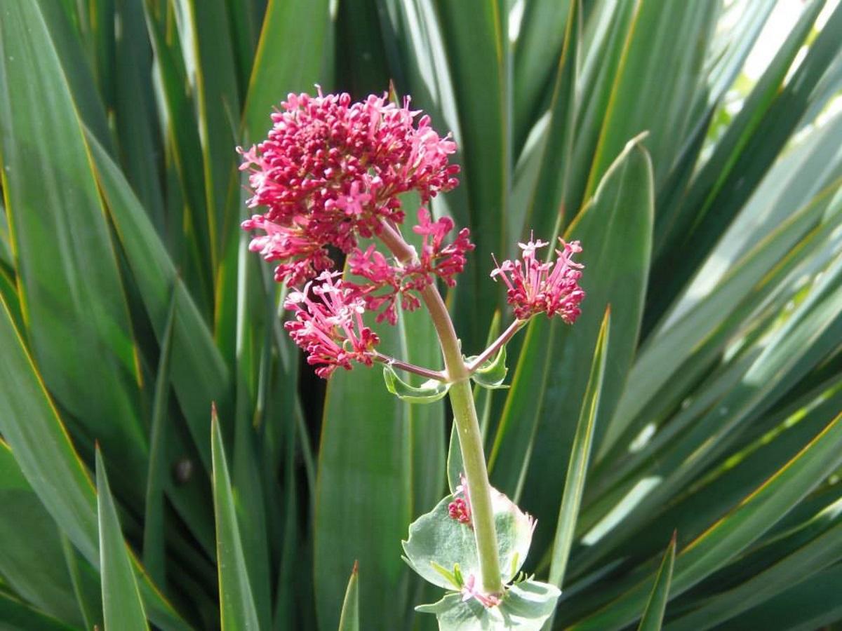 mooie-rode-bloemen-in-frankrijk