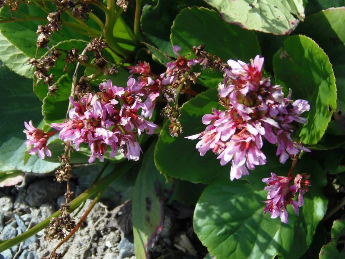 veel-bloemen-in-onze-tuin-in-frankrijk