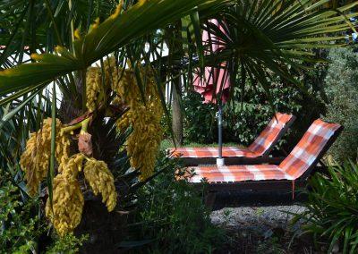 transats à côté de palmiers