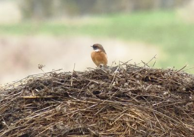 birdwatching in frankrijk