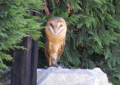 uilen in frankrijk