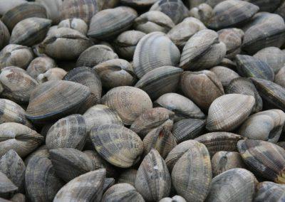 verse schelpdieren op de franse markt