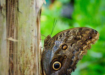 vlinders in frankrijk