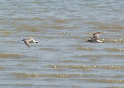 vogels aan de franse kust