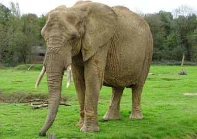 olifanten in frankrijk