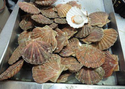 st jacobs schelpen op de markt in frankrijk