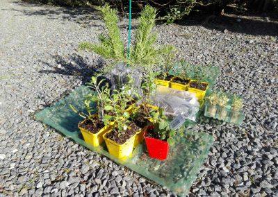 nieuwe planten voor de tuin