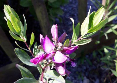 paarsen bloemen in de tuin