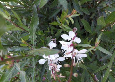 witte bloemen in de tuin