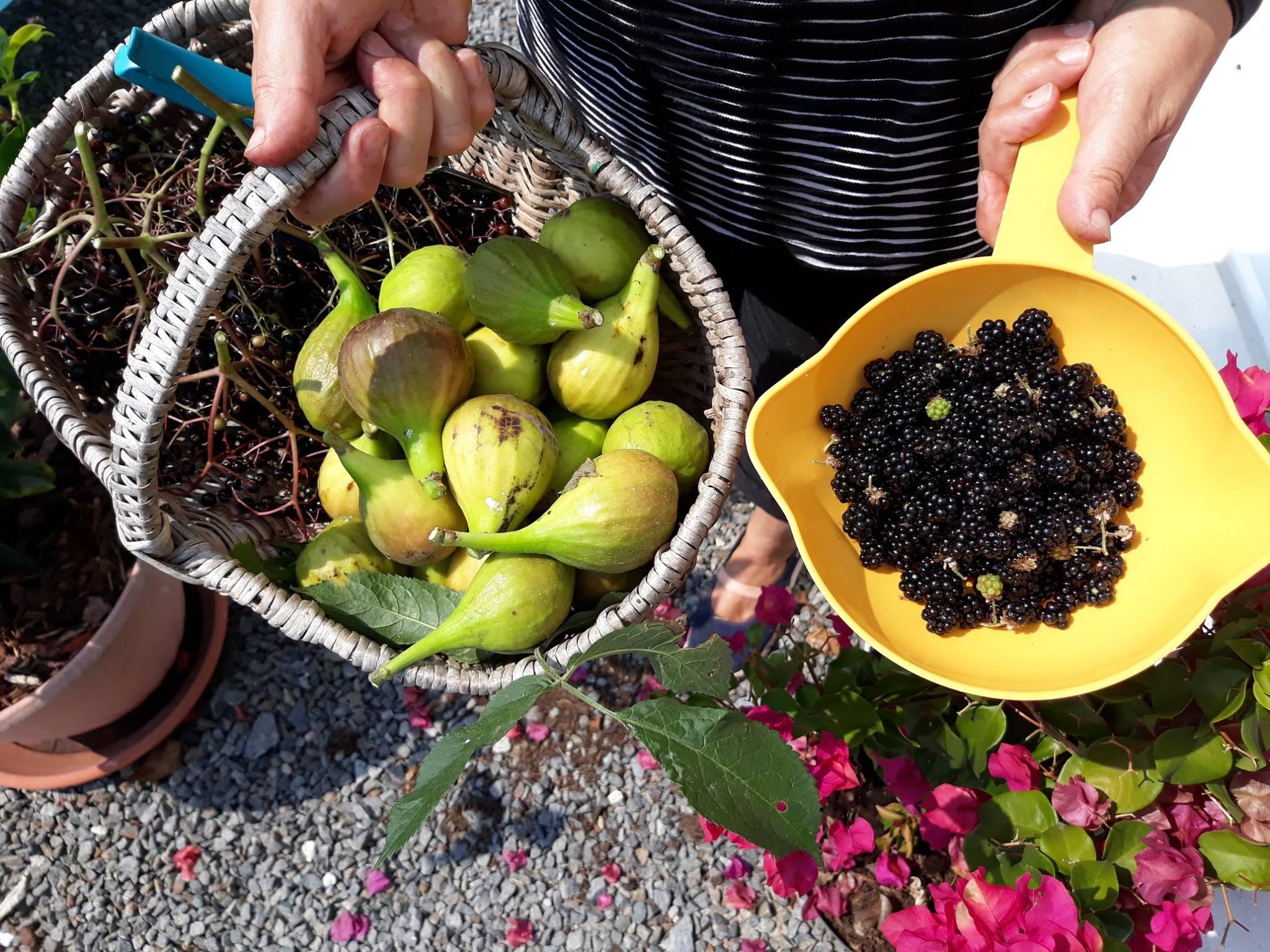 Zelf vers fruit plukken in Frankrijk
