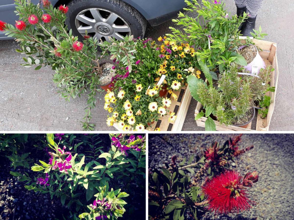 De nieuwe planten voor de tuin van Au Passage du Gois