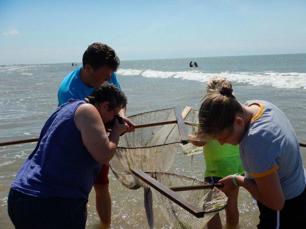 Garnalen vissen aan de kust in Frankrijk
