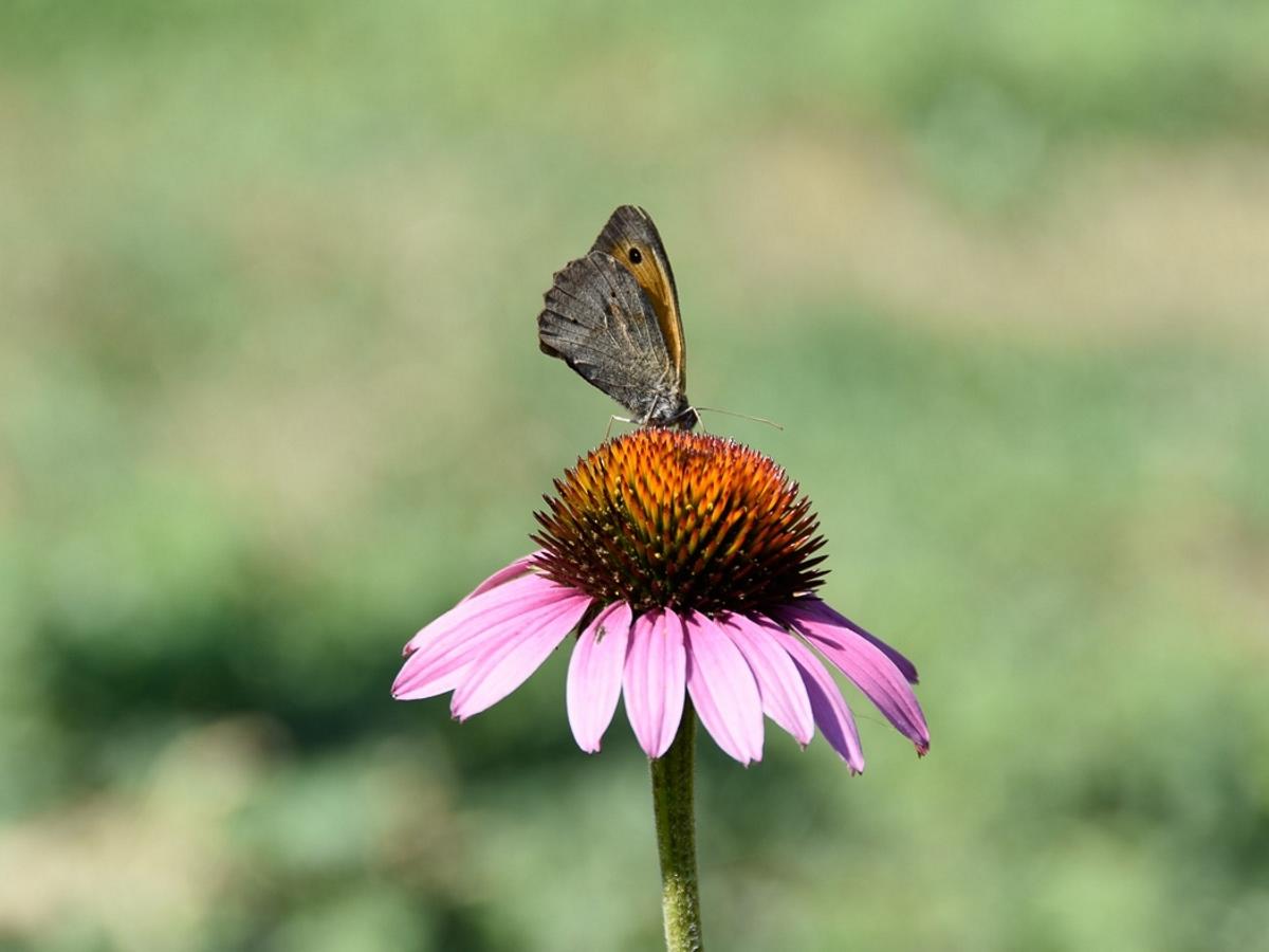 Vlinders in de tuin in Frankrijk