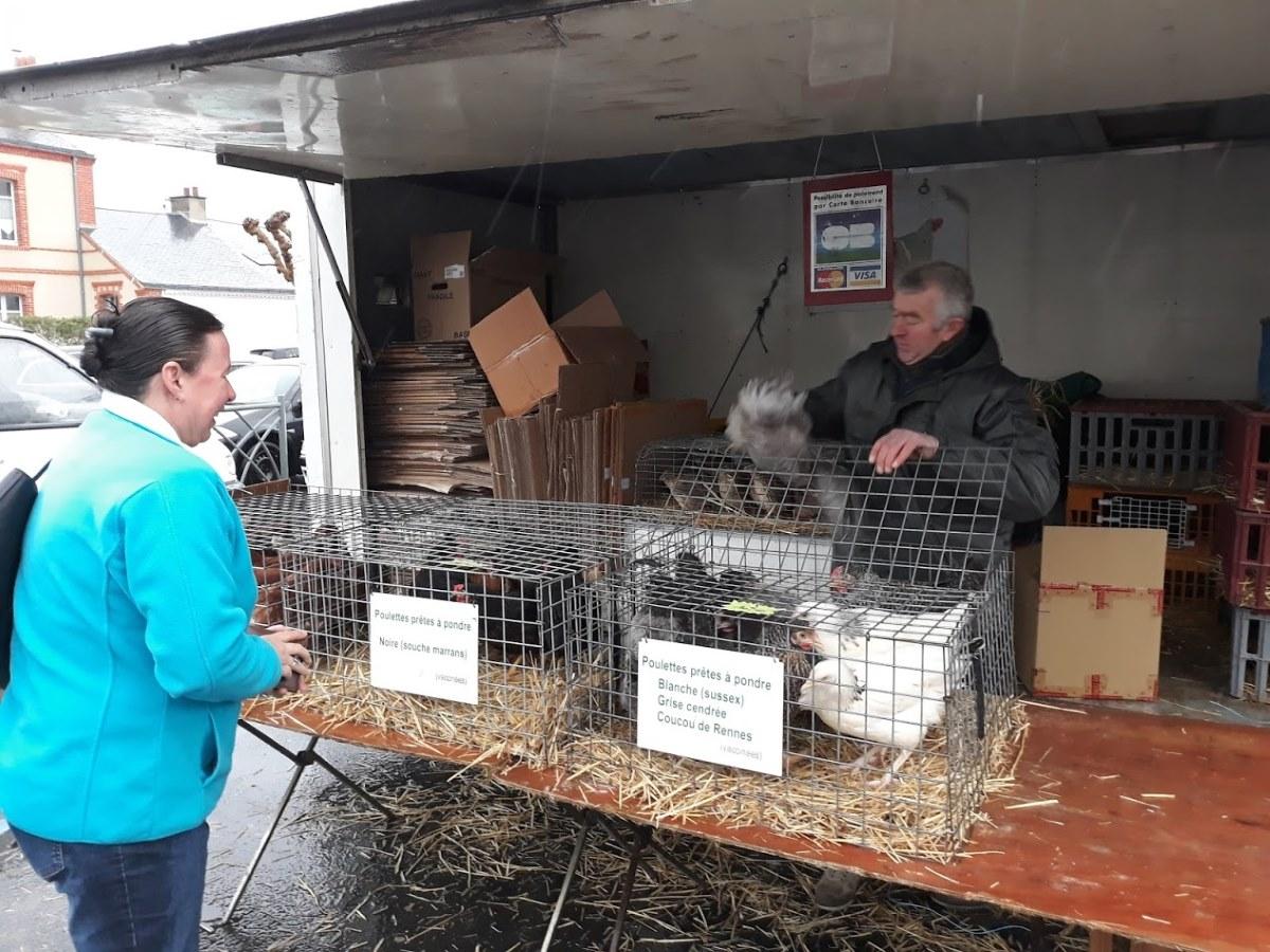 kippen kopen op de markt in Frankrijk