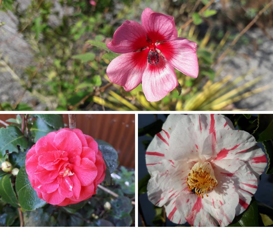 rose tuin 2018