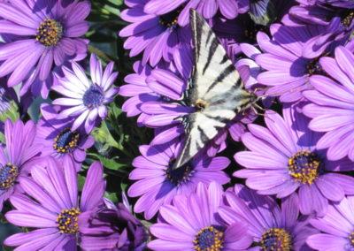 Mooie vlinders in Frankrijk
