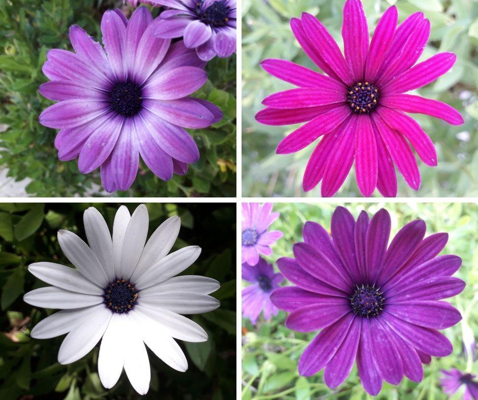 Mooie bloemen in de tuin