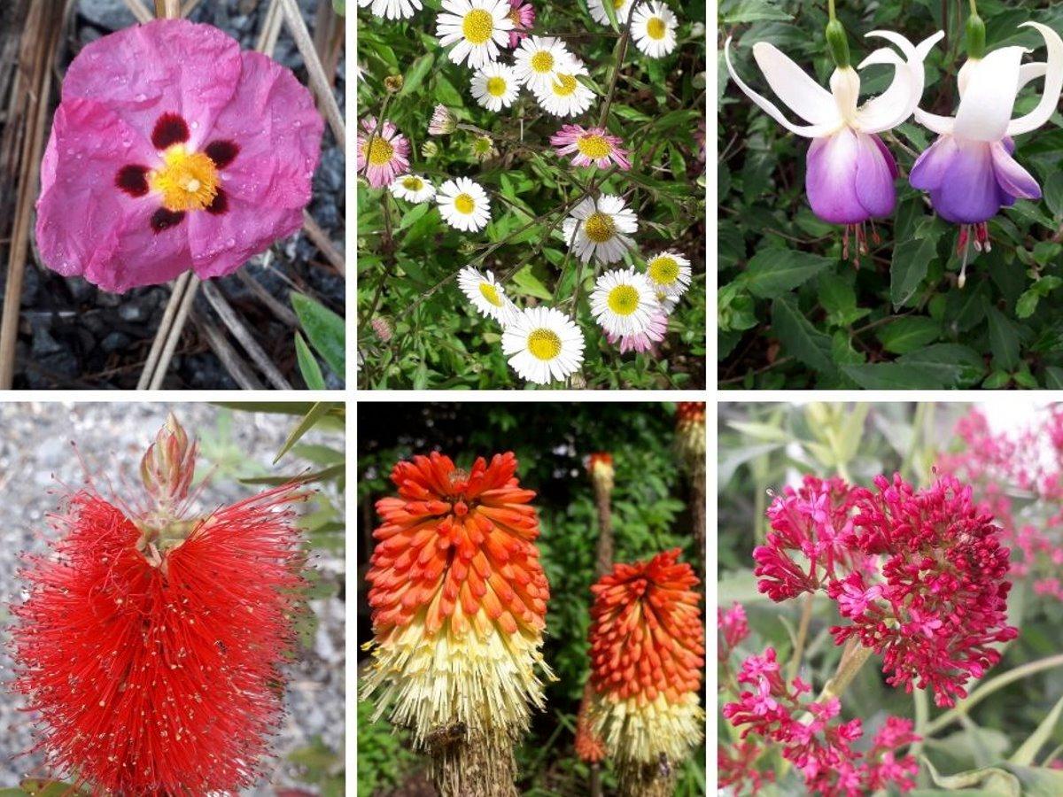 Bloemen in de tuin in Frankrijk