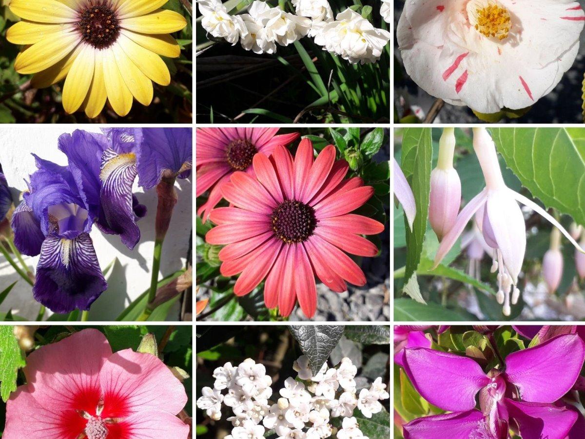 mooiste bloemen in Frankrijk